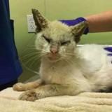 Elle aide un chat errant aveugle, quand il ouvre les yeux elle est époustouflée