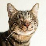 Elle photographie des chats aveugles pour leur donner plus de chances d'être adoptés