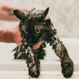 Un homme force son chat à nager dans sa baignoire et filme : il ne s'attendait pas aux conséquences