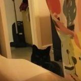 Il chante dans sa baignoire et cela déplait à son chat qui va le lui faire comprendre (Vidéo)
