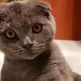 Cet adorable chat adore prendre sa douche dans l'évier ! (Vidéo du jour)