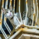 Une mamie condamnée pour avoir jeté un chat de son balcon