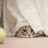 5 choses que votre chat essaye (désespérément) de vous dire