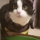 Il fabrique une Batmobile à son chat, et c'est juste génial (Vidéo du jour)