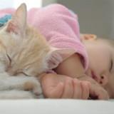 Comment préparer le chat à l'arrivée d'un bébé ?