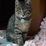 Mon chat détruit tout dans la maison, pourquoi et que faire ?