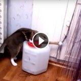 Ce chat est totalement déterminé à ouvrir un bidon ! (Vidéo du jour)