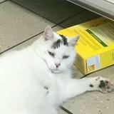 Elle entre dans un supermarché, voit un chat et explose de rire