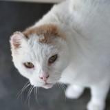 Elle veut adopter le chat le plus « effrayant » du refuge, mais apprend une terrible nouvelle