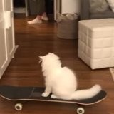 Le chat joue avec ses jouets et s'approche du skateboard, personne n'avait vu venir ce qui se produit (vidéo)