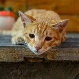 Perpignan : mais qui a tiré à 3 reprises sur ce pauvre chat ?