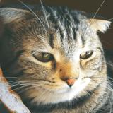Pas-de-Calais : un chat gravement blessé par un tir de carabine. La propriétaire porte plainte contre X