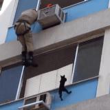 Le vertigineux sauvetage d'un chat bloqué à la fenêtre d'un immeuble (Vidéo du jour)