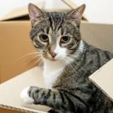 Le Bon Coin : elle poste une annonce délirante pour des jouets de chat