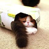 Des chats dans des boîtes (Vidéo du jour)