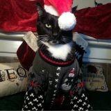 14 chiens et chats qui détestent Noël... et on les comprend ! (Photos)