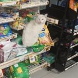Ce chat attend devant un magasin pour qu'on lui offre des friandises : une femme arrive et prend une décision radicale