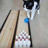Ce chat est (peut-être) meilleur que vous au bowling ! (Vidéo du jour)