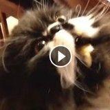 La tête de ce chat qui mange une glace va vous faire rire (Vidéo du jour)