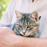 Arthrose du chat : Quels symptômes doit-on surveiller ?