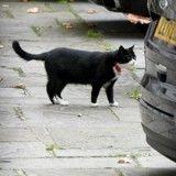 Le chat du Bureau des Affaires étrangères britannique est un employé modèle