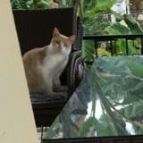 Pouvez-vous trouver le 2e chat caché sur cette photo en moins de 5 secondes ?