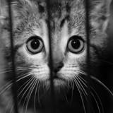 SPA : Le nombre de signalements pour maltraitance sur des animaux n'a jamais été aussi élevé