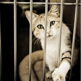 Le Noël des bêtes abandonnées : 400 chats et chiens vous attendent ce week-end !