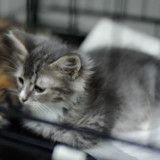 Reconnu coupable de maltraitance, un homme condamné à ne plus jamais posséder d'animal de sa vie