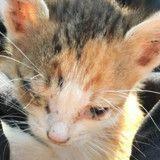 Ce minuscule chaton n'avait que 50% de chance de vivre, quelques mois plus tard…