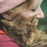 Ce chat a la plus adorable des réactions aux bisous (Vidéo du jour)