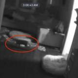 Elle entend du bruit la nuit dans sa cuisine, la caméra de sécurité révèle toute la vérité !