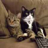 Faut-il interdire la présence de plusieurs chats dans un même foyer ?