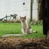 Horrifiés, ils voient leur chat prendre un caneton dans sa gueule, mais ils font erreur sur toute la ligne (Vidéo)