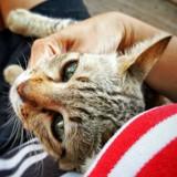 Elle remarque que son chat ne se comporte pas normalement, le médecin lui fait une terrible annonce