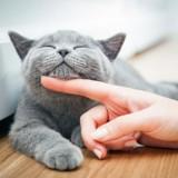 Comment bien accueillir un chat à la maison, même quand on en a déjà un ?