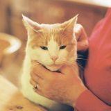 Pour leur éviter un stress inutile, ne caressez pas trop vos chats !