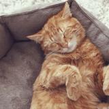Quizz : votre chat est-il heureux ?