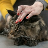 Une députée milite pour que les chats soient autorisés à l'Assemblée nationale