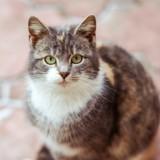Il y a un an ce chat a trouvé de la nourriture sur le sol, depuis il vérifie tous les jours au même endroit !