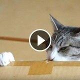 Ce chat qui joue dans un carton est trop mignon ! (Vidéo du jour)