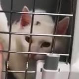 Elle voit 2 chats prisonniers sur le rebord d'une fenêtre : des bénévoles découvrent le pire en entrant…