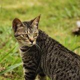 La chasse au chat bientôt interdite en Allemagne ?