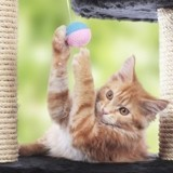 Jouez avec votre chat pour révéler ses instincts de prédateur !
