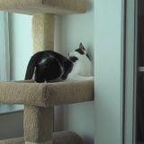 Quand le chat Kodi veut faire sa toilette... (Vidéo du jour)