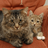 Comment calculer l'âge de son chat en âge humain ? La réponse en vidéo