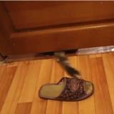 Le chat qui ne peut pas s'empêcher de voler des chaussons (Vidéo du jour)