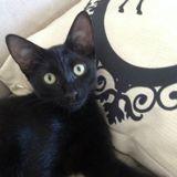 Adopté après 9 mois dans un refuge, ce chat a trouvé un ami très (très) différent !