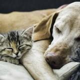 20 chats et chiens qui s'aiment et vont vous faire fondre (Photos)