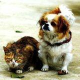 Vers une interdiction de la viande de chat et chien en Chine ?